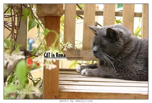 cat-roma0602-6