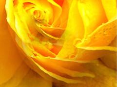 i.e.l.o.rose, 6 aout 2005
