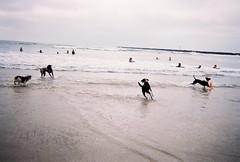 dog beach playing