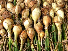 white onions drying   by Muffet