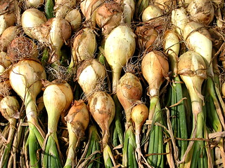white onions drying | by Muffet