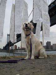 East River Prayer Flags #10