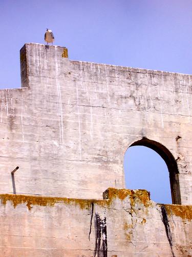 Seagull Atop Wall on Alcatraz