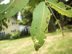 A Bug on a Tree