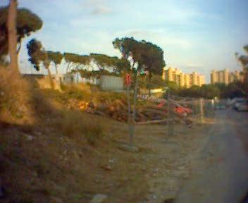 Tallant pins al costat de Can Solei