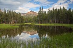 A peaceful pond near Tioga Pass