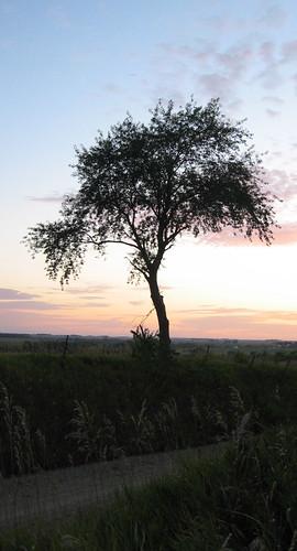 iowa sunset geotagged geolat42111977 geolon91884155 tree trees tag1 tag2 tag3 taggedout