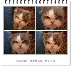 200508玄霜理毛011