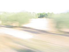el olivo veloz