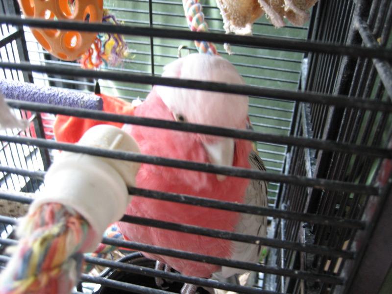 bird behind bars