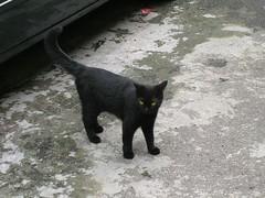 takyubin-cat