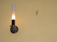 Gecko_@_FCC,_Phnom_Penh