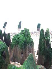 Suffolk Seaside #1