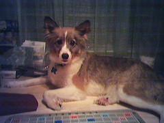 Hobbit & Scrabble