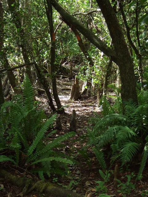 2007_0428loop_road_hike0163