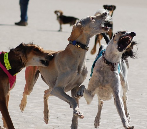 Playa playing pooches