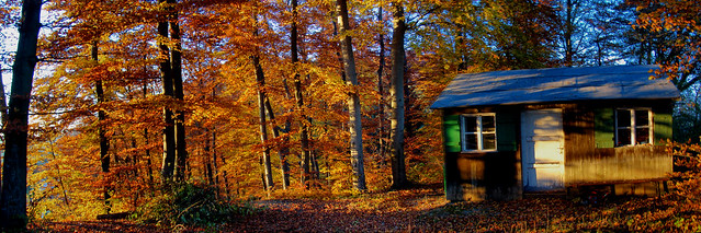 HDR Panorama of an autumn forest