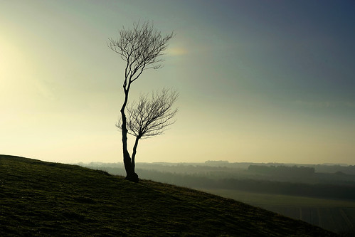 tree hill hilltop dusk evening view pegsdon chiltern chilterns chilternhills beds bedfordshire sunset winter february bare stark lonely windswept escarpment slope isolated twilight landscape uk unitedkingdom england english countryside country britain british deaconhill