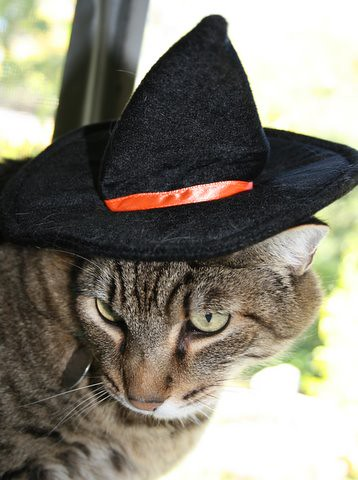 How Do You Like My Hat?
