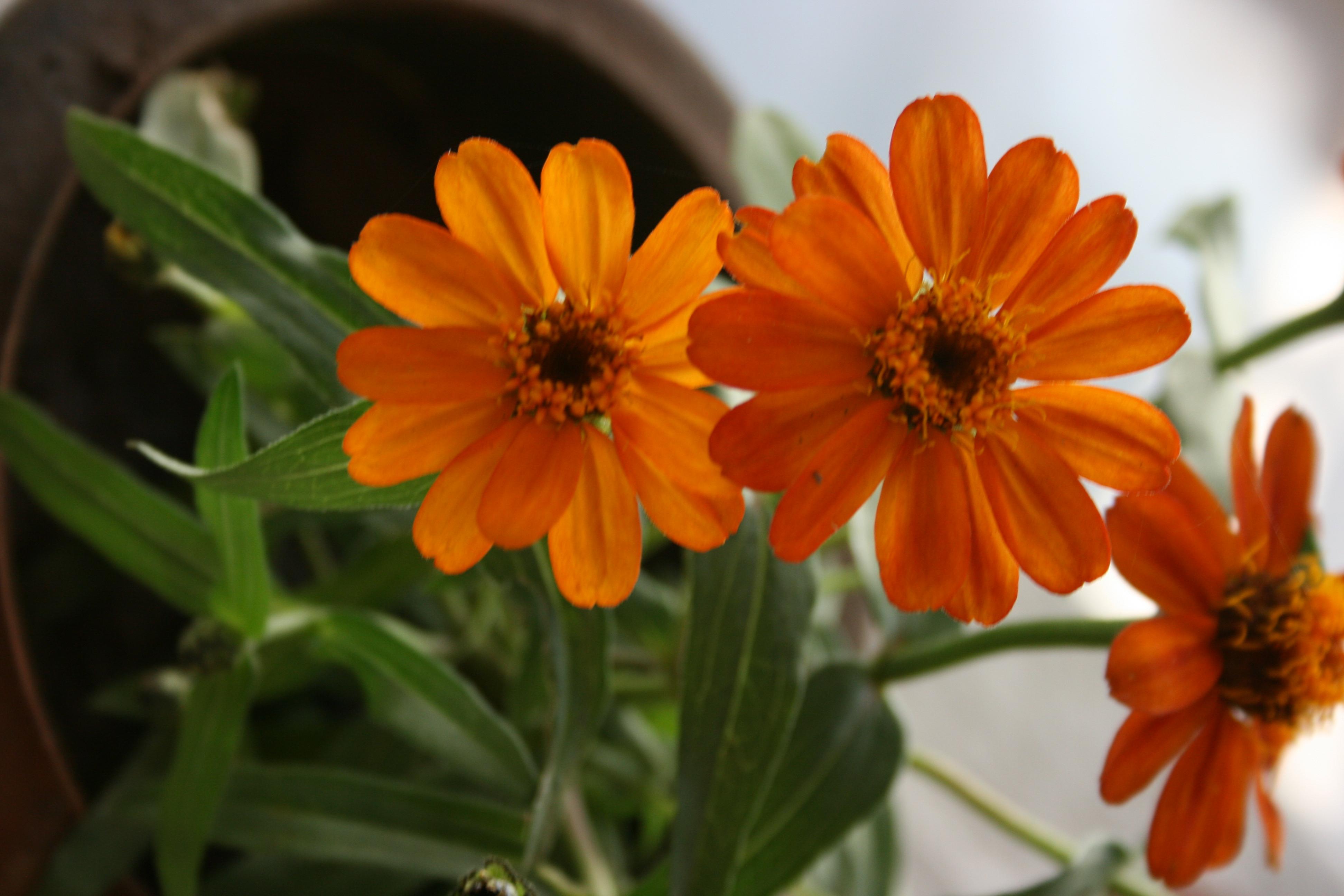 Flowers in Balcony