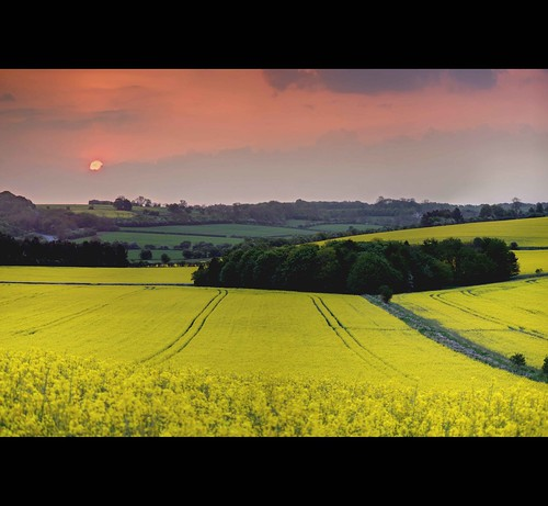 morning trees england sun yellow clouds sunrise canon landscape eos dawn early flickr cymru harvest meadow cotswolds fields goldenvalley canola rapeseed copse photomatix rapeseedfields 450d platinumheartaward seedoil mygearandme mygearandmepremium mygearandmebronze mygearandmesilver mygearandmegold mygearandmeplatinum mygearandmediamond seedoilrape cotswoldharvest
