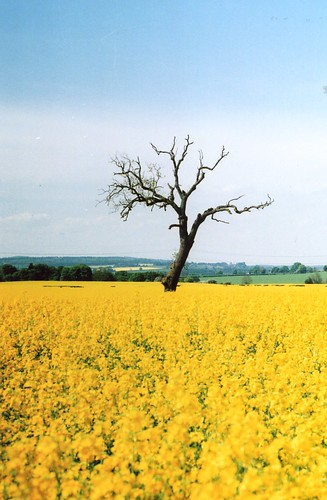 Rape Seed Field, Waggon Lane Churchill, Looking Toward Ismere (Andrew Yardley) | by C&B Account