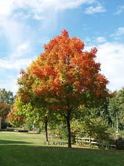 Tree in Fall | by eyewitness of moment