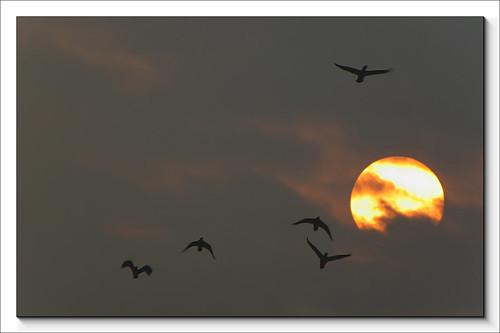 birds clouds sunrise flying tele newday babyborn tamron28300mm goldensun pentaxk100d photossance