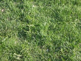 Grass | by paulofierro
