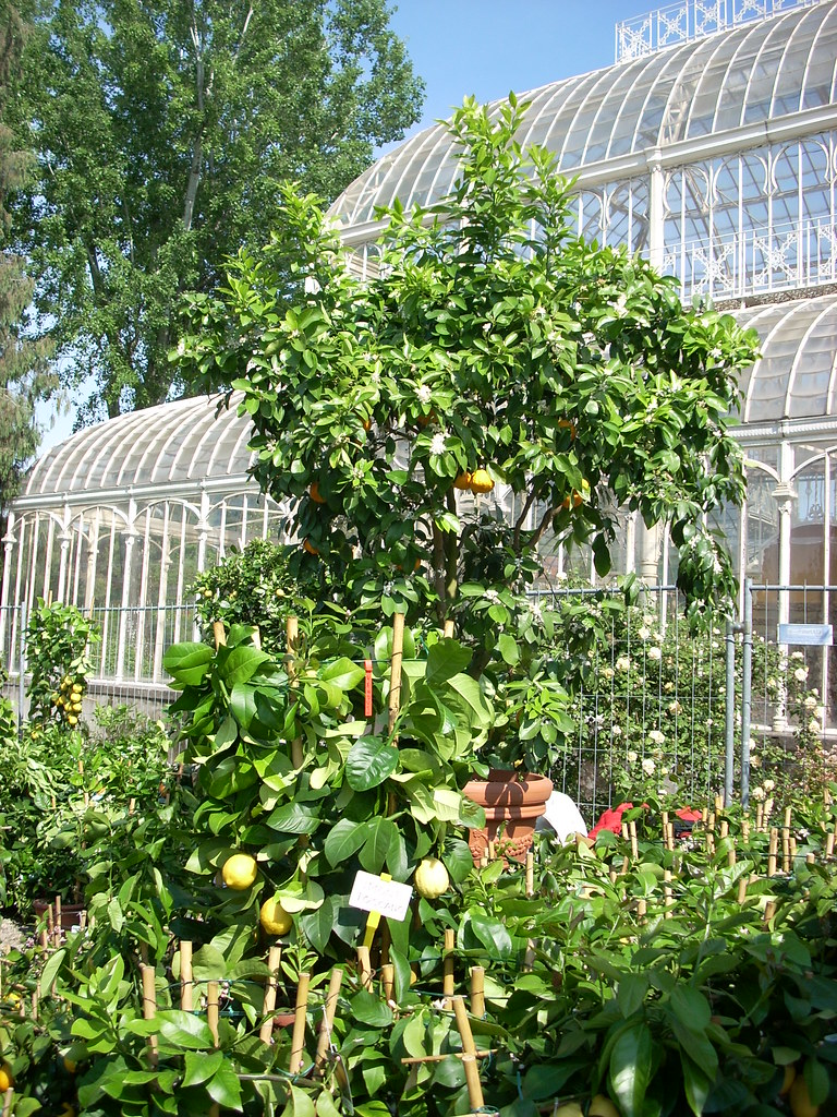 Immagini Piante E Fiori 5 piante e fiori 25 apr   luciano.coluccia   flickr