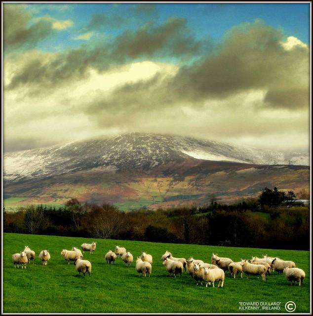 COLD MOUNTAIN. (IRELAND)