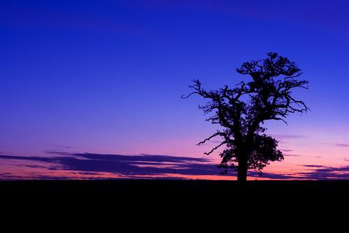 trees tree sunrise denham mywinners superbmasterpiece youvsthebest jeannysfoto scenicsnotjustlandscapes