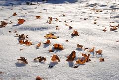 winter walk.6 | by SouleMama