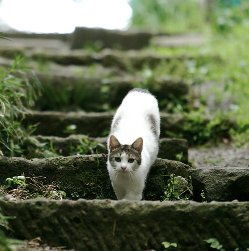 Cat on Stairs. | by iMorpheus