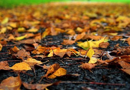 fall leaves pennsylvania g3 qtpfsgui greenvalleytwppark