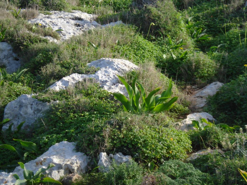 Garigue Landscape Qammieh Malta Leslie Vella Flickr