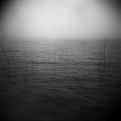 Holga: Lime Lake