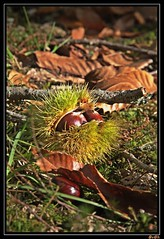 tema: l'autunno