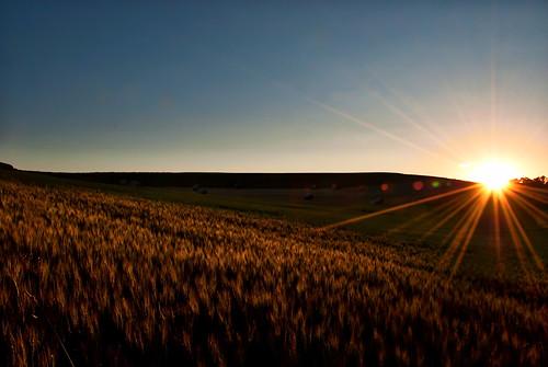 wheat markdodd americankiwiphotocom markdoddphotographycom markdoddphotography hay farmequipment farm combine americankiwiphoto sunset bale upperco maryland unitedstates us