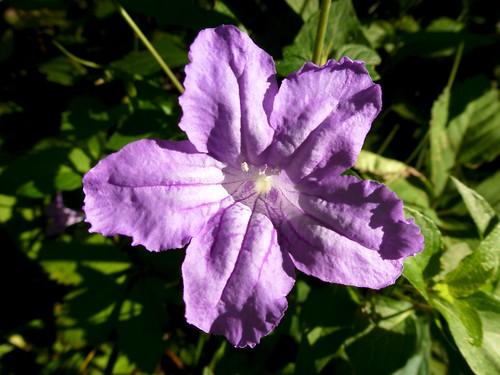 Purple Flower | by gmeador