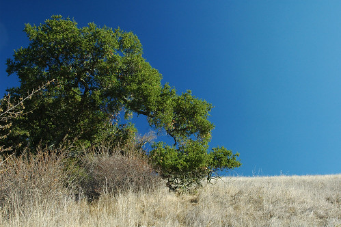 Trees and Sky 11 | by bmiller1710