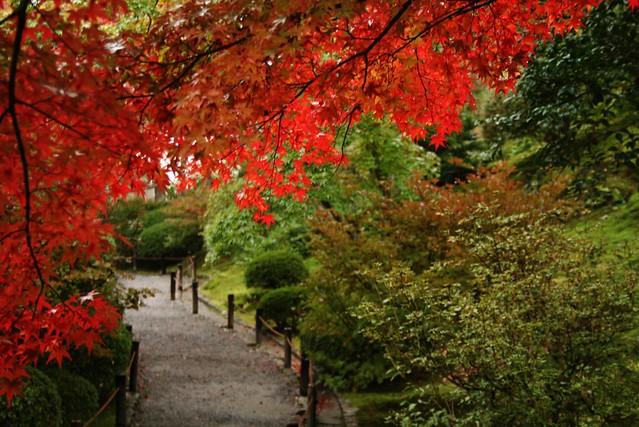 A walk in a Japanese garden