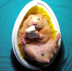 2. Hamster in egg - Chmurka hatched! | by pyza*