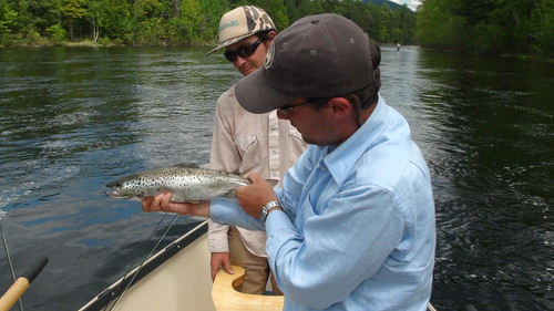 Big Eddy Salmon | by Maine River Guides