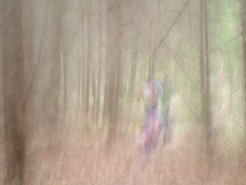 Walkers in wood Yalding to Borough Green