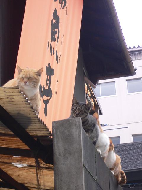 A cat and a fish shop