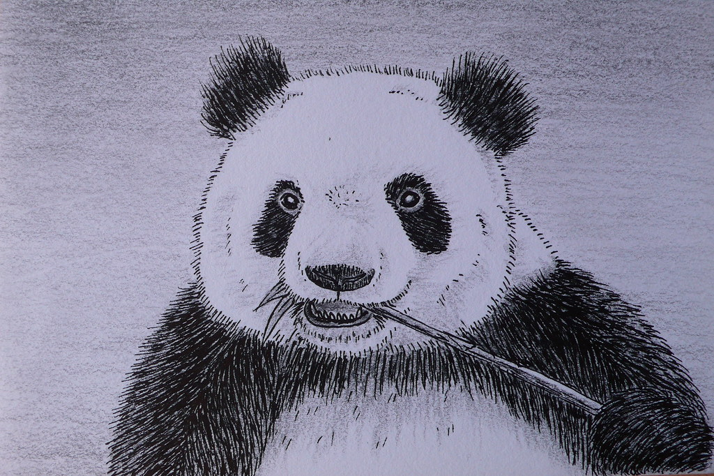 Панды картинки нарисованные карандашом, лесника