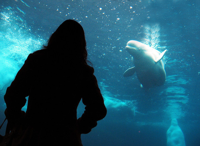 Sihouette at the aquarium - wait for the moment!