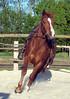 hs_hellwach by pferdeohren