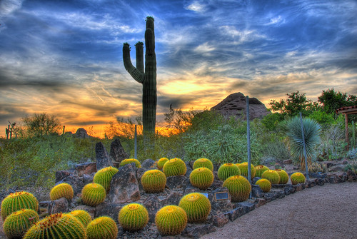 travel sunset arizona cactus clouds botanical rocks desert searchthebest barrel scottsdale saguaro hdr blueribbonwinner anawesomeshot cactisucculentsbulbplants ysplix searchandreward flickrelite